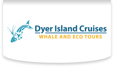 Dyer Island Cruises