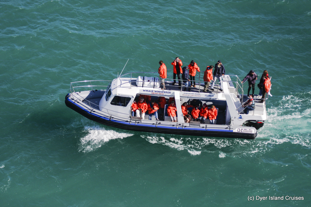 Our boat – Whale Whisperer