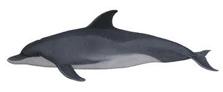 conservationBottlenosedolphin