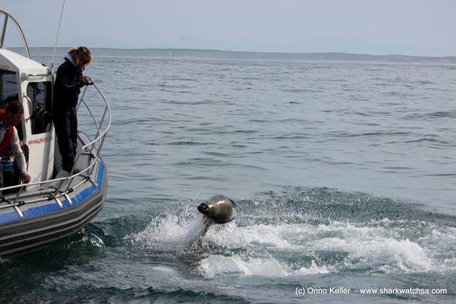 Seal vs Shark