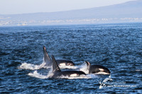 The best day ever…featuring some Orca's!