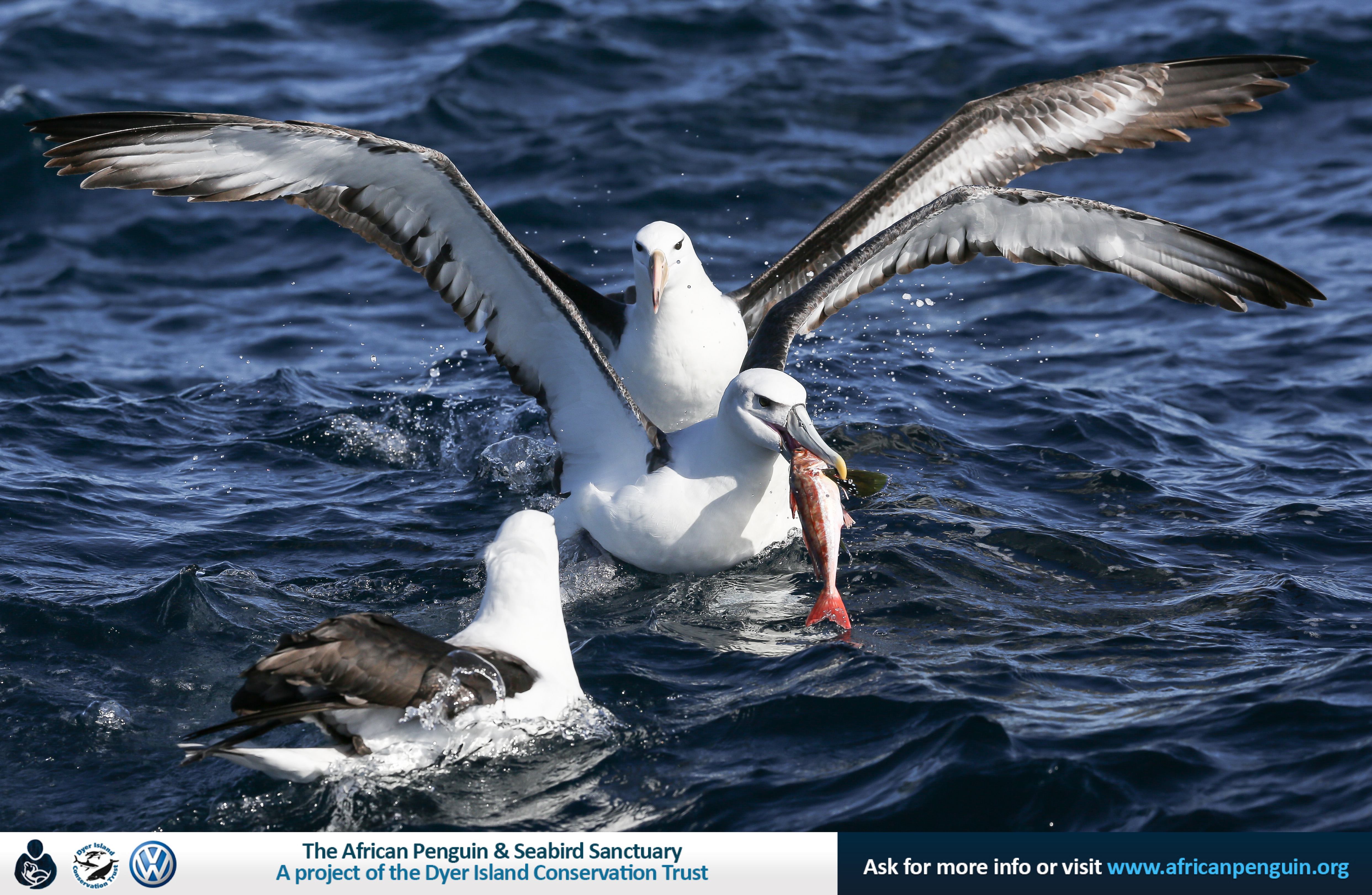 26 June 2016 | Pelagic Encounters – Bird watching