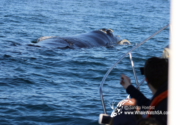 1 August 2016 | Whale Tours South Africa