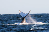 2 August 2016 | Whale Watching