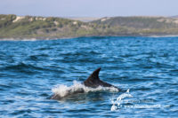 15 August 2016   Boat Based Whale Watching