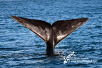 23 August 2016   Boat Based Whale Watching
