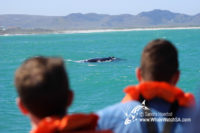 26 August 2016 | Whale Tours South Africa
