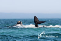 27 August 2016 | Whale Watch Tours