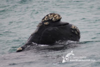 28 August 2016   Whale Watching