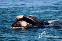 30 August 2016 | Boat Based Whale Watching