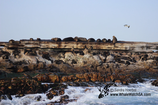 31 August 2016 | Whale Watching Gansbaai