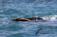 12 September 2016 | Whale Watch Tours