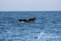 15 September 2016 | Whale Watching Gansbaai