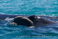 19th September 2016 | Whale Watching