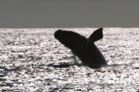 21 September 2016 | Marine Big 5 Safari