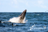 22 September 2016   Boat Based Whale Watching