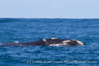 23 September 2016 | Whale Watching Gansbaai