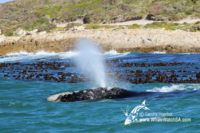 25 September 2016 | Whale Tours South Africa