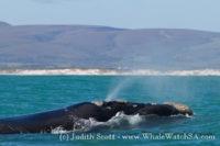 30 September 2016 | Marine Big 5 Safari