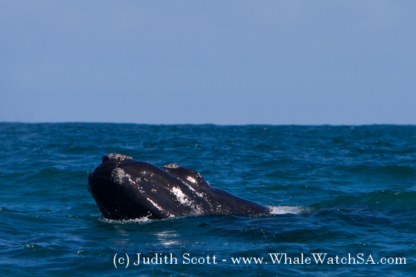 01 October 2016   Boat Based Whale Watching
