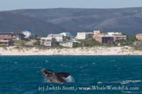 03 October 2016 | Whale Tours South Africa