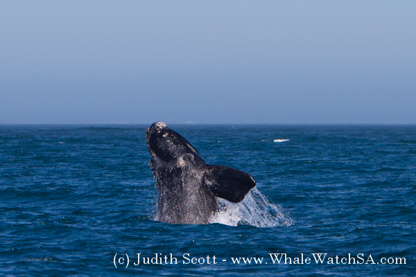 04 October 2016 | Whale Watching