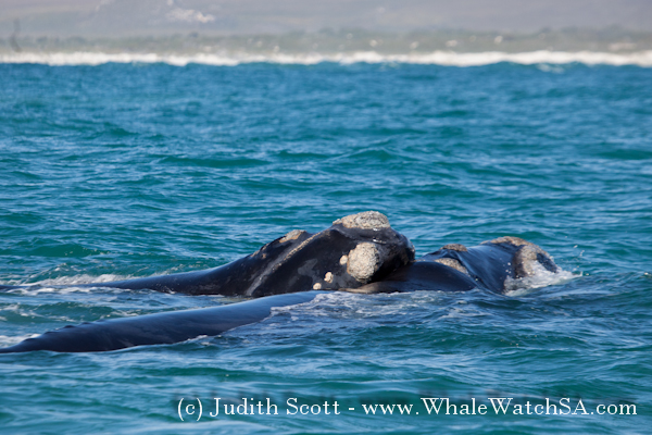 07 October 2016 | Boat Based Whale Watching