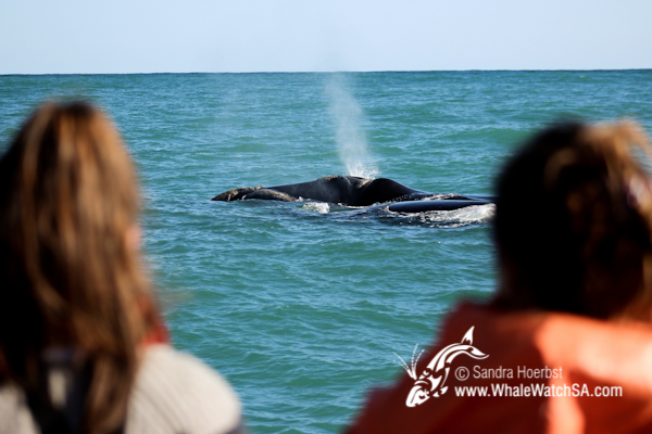 09 October 2016 | Whale Tours South Africa