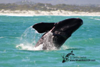 10 October 2016 | Whale Watching