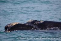 14 October 2016   Marine Big 5 Safari