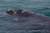 15 October 2016 | Boat Based Whale Watching