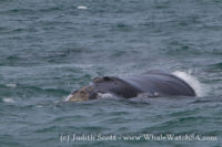 18 October 2016   Whale Watching