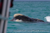 19 October 2016   Whale Watch Tours