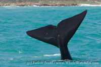 23 October 2016 | Whale Watching Gansbaai