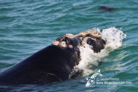 24 October 2016 | Whale Tours South Africa