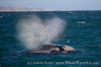 25 October 2016   Whale Watching