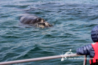 30 October 2016 | Whale Watching Gansbaai