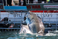 31 October 2016   Whale Tours South Africa