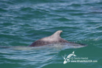 06 November 2016   Boat Based Whale Watching