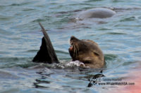 08 November 2016   Whale Tours South Africa
