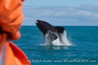 17 November 2016 | Whale Watching Gansbaai