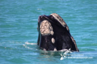 18 November 2016 | Whale Tours South Africa