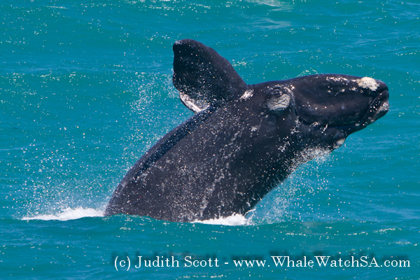 19 November 2016   Whale Watching