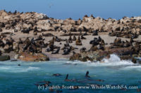 20 November 2016 | Whale Watch Tours