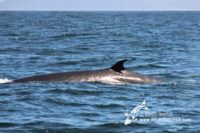 28 November 2016 | Boat Based Whale Watching