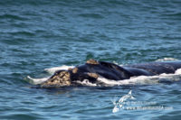 01 December 2016   Boat Based Whale Watching