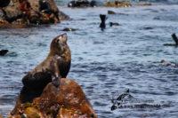 29 December 2016   Marine Safari Gansbaai