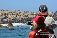 11 January 2017 | Marine Big 5 Tours