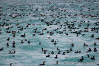 06 February 2017 | Marine Safari