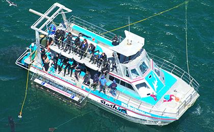Slashfin, our custom built cage diving boat